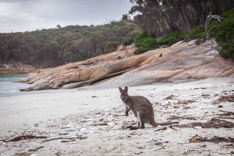 DSC07144 2b - Roadtrip po Tasmanii - atrakcje, noclegi, informacje praktyczne [PORADNIK]